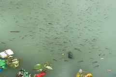 Garbage in the water. Bad ecology. River City. Royalty Free Stock Photography