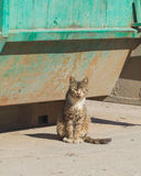 The garbage wild cat after a meal. Stock Image