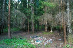 Garbage in the woods. Garbage in the forest and dead trees near it Stock Images