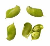 Garbanzo Bean Pods Royalty Free Stock Photos