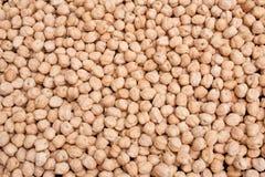 Garbanzo Beans Chick Pea 5155 Royalty Free Stock Photos