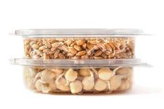 Garbanzos y trigo germinados Fotos de archivo libres de regalías