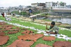 Garbarni zanieczyszczenie w Dhaka i źródło dochodu Zdjęcie Stock