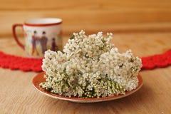 Garbe, Blume der Schafgarbe (Achilea-millefolium) Lizenzfreie Stockbilder