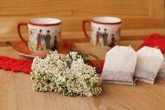 Garbe, Blume der Schafgarbe (Achilea-millefolium) Stockfotografie