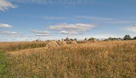Garben auf dem Roggengebiet Stockbild