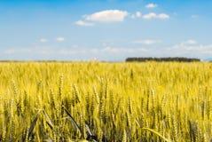Garben Weizen auf einem Gebiet Lizenzfreie Stockbilder