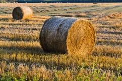 Garbenernte am Sonnenuntergang-, Ernährungs-, Lebensmittel- und Wachstumskonzept Stockfoto