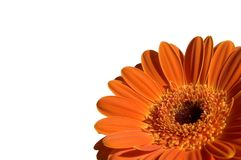 Garber orange Images libres de droits