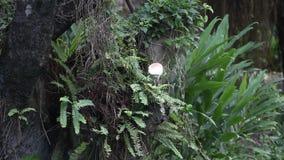 Garceta de ganado (Bubulcus Ibis) que busca la comida en el top del árbol metrajes