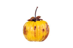 Garcinia cambogia fruit, isolated on white. Fruit for diet and g Royalty Free Stock Photography
