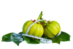 Garcinia cambogia with measuring tape, isolated on white backgro. Still life garcinia atroviridis fresh fruit with measuring tape on leaves, isolated on white Stock Image