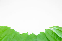 Garcinia cowa roxb placed on a white background. stock images