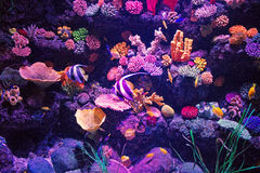 Sea Life Royalty Free Stock Photography