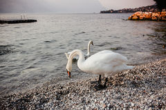 Gardameer Italië Europa royalty-vrije stock foto