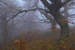 Garde brumeuse de forêt Image stock
