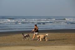 Garde d'enfants de SAO PAULO - du BRÉSIL 9 avril 2016 des chiens marchant sur la plage Photographie stock