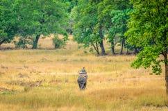 Garde de forêt patrouillant le parc sur l'éléphant photographie stock