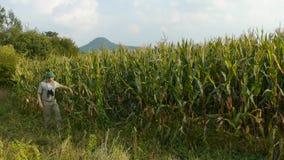 Garde forestière avec des jumelles dans le champ de maïs banque de vidéos