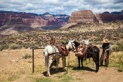 Garde forestière dans Grand Canyon, Arizona, Etats-Unis images libres de droits