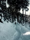 Garde forestière perdue Photo libre de droits