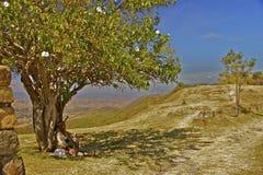 Garde se reposant sous l'arbre fleurissant de gloire de matin Photo libre de droits