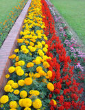 The Garden royalty free stock photo