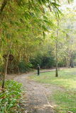 Garden. Walkway in tropical garden, Thailand Stock Photography