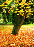 Garden. Park with Bright Autumn Leaves Royalty Free Stock Photography