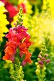 Garden. Image of garden in chinese Stock Photo