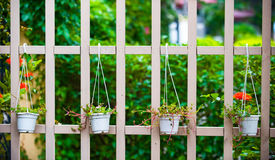 Garden. White picket fence and green plants at country house Royalty Free Stock Images