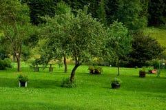 Garden. A modified garden, grass, tree Royalty Free Stock Photography