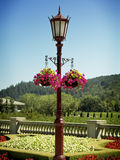 Garden. Hanging Flowers with an Old Fashioned Lantern royalty free stock images