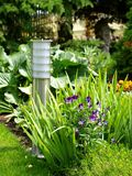 Garden. Summer garden with emerging perennial flowers and plants Royalty Free Stock Photography