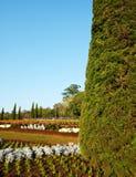 Garden Royalty Free Stock Image