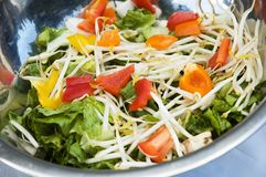 From the garden 2. Salad plate with lettuce, beans sprouts, orange, red, yellow and green peppers royalty free stock photography