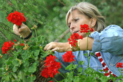 In the garden [2]. Middle aged woman picking flowers in the garden Stock Photo