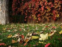 Garden 2. Autumn leaves on the ground Royalty Free Stock Photo
