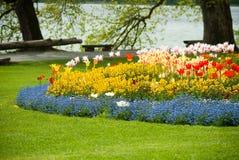 Garden. Tulips of various colors in a garden Stock Image