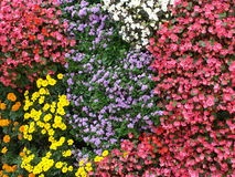 Garden. In Bilbao, Spain Stock Image