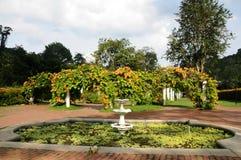 Garden. A Japanese Garden in Australia. Shot taken at Mt.Coot-tha Park near Brisbane, Australia Stock Image