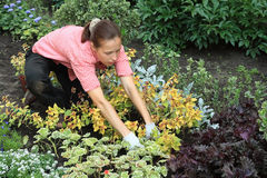 In a garden. Kneeled young woman planting out flowers in a garden Stock Photography