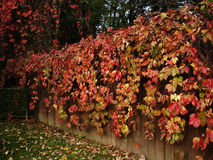 Garden 3. Nice looking garden fence in autumn Royalty Free Stock Photos