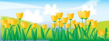 Garden 3r (with ai file). Yellow follow and green garden Stock Photos
