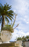Garden. Potted plant in a garden with Rows of palm trees near the beach Royalty Free Stock Photo