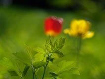 Garden Stock Image