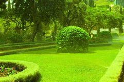 Garden. Watering Of Beautiful Green Garden Stock Photography