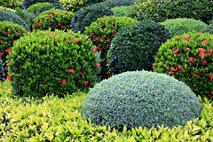 Garden. Beautifully manicured garden boxwood shrubs Royalty Free Stock Photo