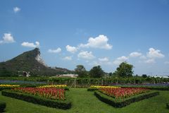 Garden. Green garden in beatiful day Stock Images