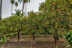 Garden in Alcazar of Seville, Spain Stock Image